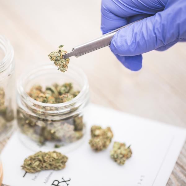 Marijuana a medical perspective