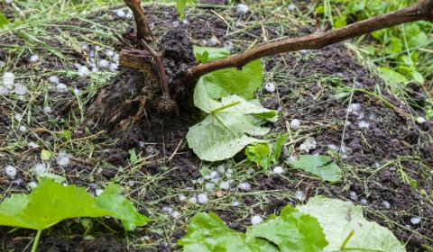 Blog post 2021 q3 uk farmers insurance hail damage