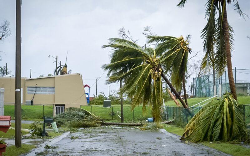 Hurricane Maria winds topple trees